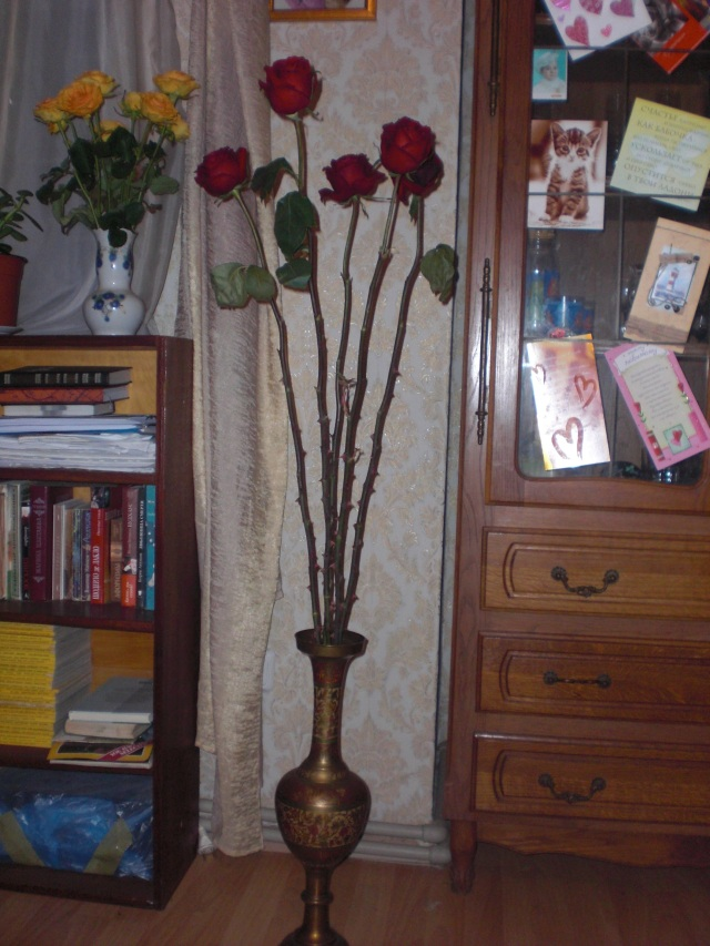 Wedin roses fm Dad